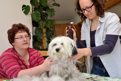 Hundebesitzerin hilft Hundefriseurin