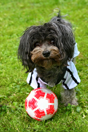 Hund im Fussballtrikot