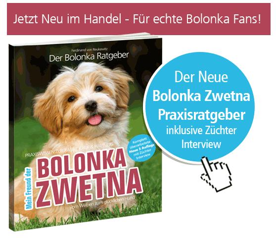 bolonka zwetna trimmen & haare schneiden - so geht's: