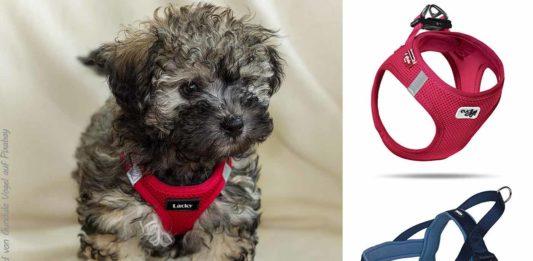 Hundegeschirre für Bolonka Zwetna Hunde